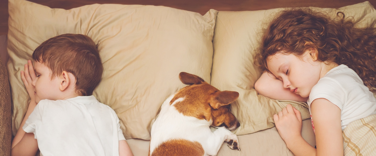 kids sleep supplements: Sweet curly girl and jack russell dog is sleeping in night.